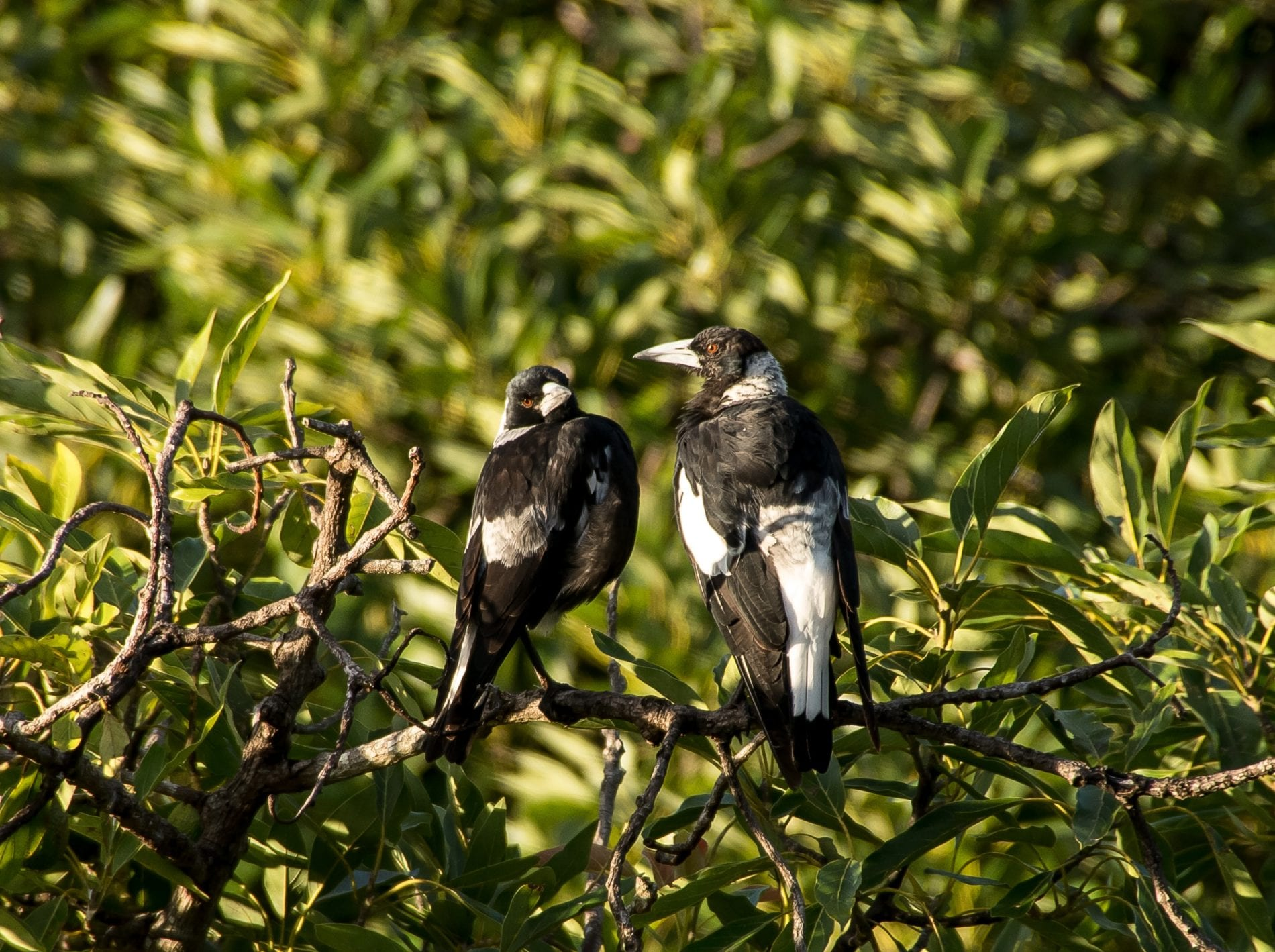 two birds resting on a branch -  kandy activities , birds watching